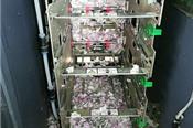 Chuột chui vào máy rút tiền ở Ấn Độ, cắn nát 18.000 USD