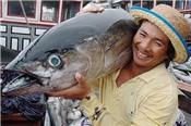 Mối nguy thủy sản Việt bị cấm xuất khẩu vào châu Âu đã cận kề