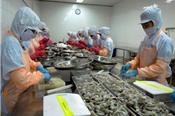 Ban hành kế hoạch hành động quốc gia phát triển ngành tôm