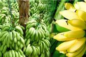 Những loại trái cây 'sốt' giá sau khi Trung Quốc tăng mua