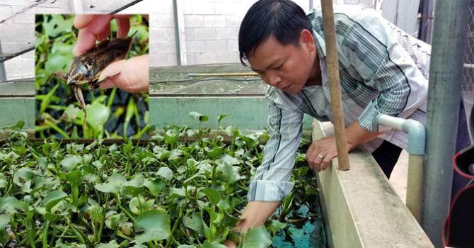 Nam thanh niên nuôi cà cuống thu nhập hàng trăm triệu đồng ở Sài Gòn