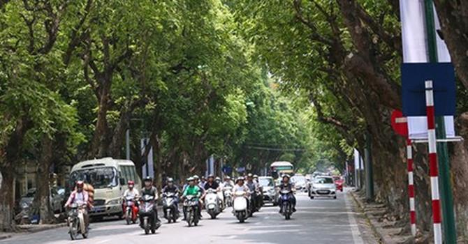 Thị trường 24h: Hái sấu đầu mùa kiếm tiền triệu mỗi ngày ở Hà Nội