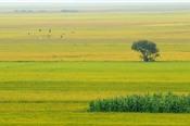 Quy định mới về chuyển mục đích sử dụng đất nông nghiệp sang đất ở