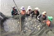 Thủy sản Việt Nam năm 2019 xây dựng mục tiêu xuất khẩu 10 tỷ USD