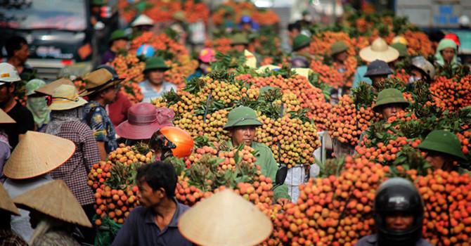 """Thị trường 24h: Nhãn vải được mùa vẫn """"ngay ngáy"""" lo vì phụ thuộc thương lái Trung Quốc"""