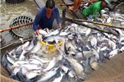 Xuất khẩu cá tra sang Mỹ tăng trưởng 3 con số trong hai tháng liên tiếp