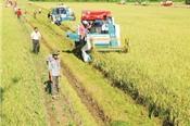 Xuất khẩu gạo tiến chắc