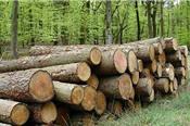 Tạm ngừng kinh doanh tạm nhập, tái xuất gỗ tròn, gỗ xẻ từ rừng tự nhiên từ Lào và Campuchia