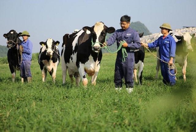 GTN mua thêm gần 30 triệu cp Sữa Mộc Châu, Vinamilk đang có tính toán gì?