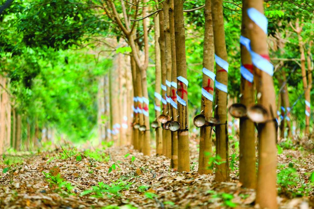 PHR nhận quyết định thu hồi 346 ha đất để thực hiện dự án KCN Nam Tân Uyên mở rộng