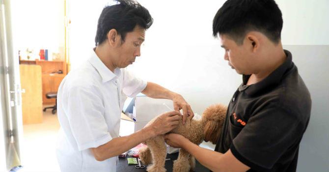 Hốt bạc ngày Tết nhờ nhận nuôi chó ký gửi
