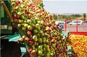 Ấn Độ tăng thuế hàng Mỹ nhập khẩu, lên tới 70% với táo