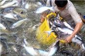 Thêm trở ngại cho cá tra Việt Nam để vào thị trường Arab Saudi