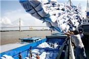 Cơ hội xuất khẩu khoảng 20.000 tấn gạo sang thị trường Ai Cập
