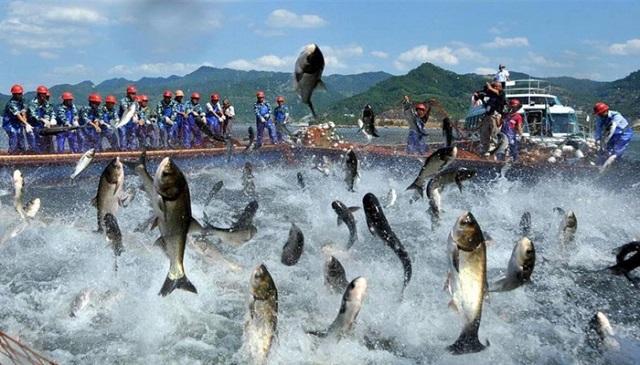 3 đối tượng thủy sản nuôi chủ lực