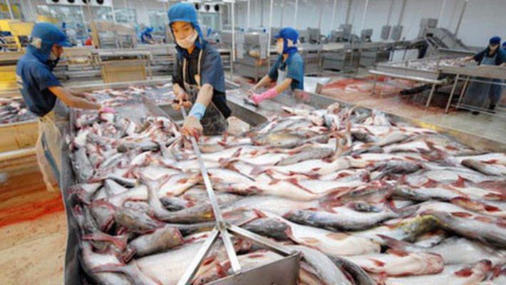 Trung Quốc vẫn là thị trường tiềm năng cho cá tra Việt Nam