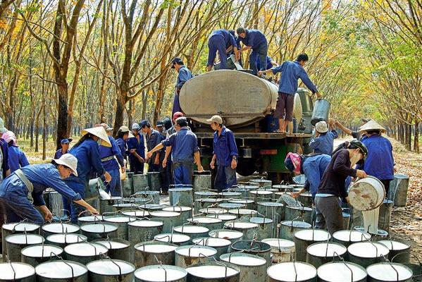 Tập đoàn Công nghiệp Cao su VN: Mục tiêu lợi nhuận bình quân 5,500 tỷ đồng/năm đến 2020