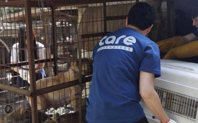Cứu chó từ lò mổ nhưng lại giết chó để lấy tiền tài trợ, nhóm bảo vệ động vật nổi danh Hàn Quốc đang khiến dư luận phẫn nộ