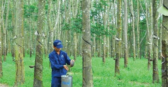 Cao su Đồng Phú lãi hơn 159 tỷ đồng trong 10 tháng đầu năm