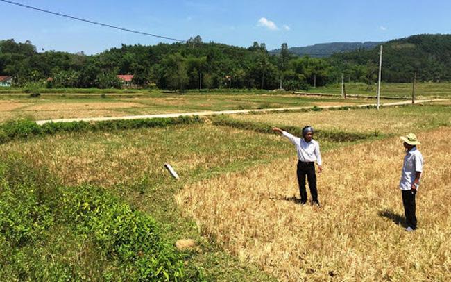 Đầu cơ buôn đất ruộng ở Nhơn Trạch kiếm hàng chục tỷ đồng