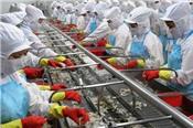 Lãi ròng Tôm Minh Phú tăng 68% trong 8 tháng đầu năm, xuất khẩu kỷ lục