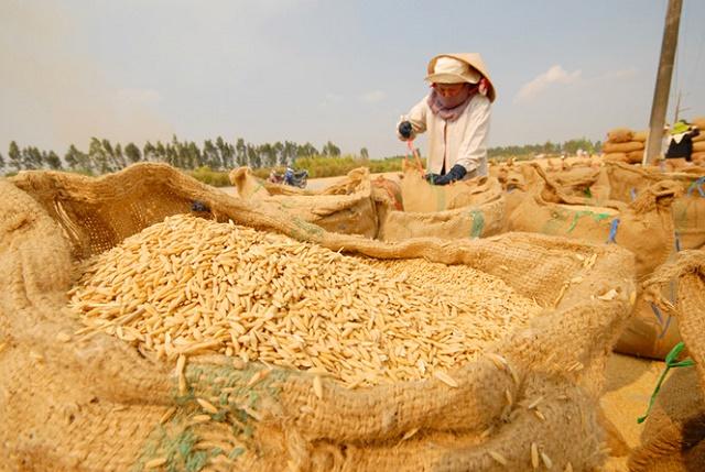 Nếp Việt Nam gặp khó ở Trung Quốc
