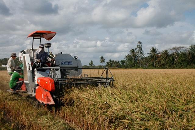 Giật mình giá xuất khẩu gạo