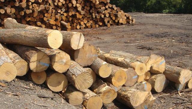 Tạm ngừng nhập, tái xuất gỗ tròn, gỗ xẻ từ Lào và Campuchia