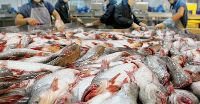 Việt Nam khiếu nại biện pháp chống bán phá giá của Hoa Kỳ đối với cá tra, basa lên WTO