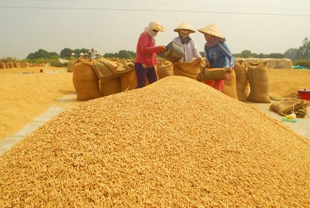 Lúa gạo lại chờ 'giải cứu'