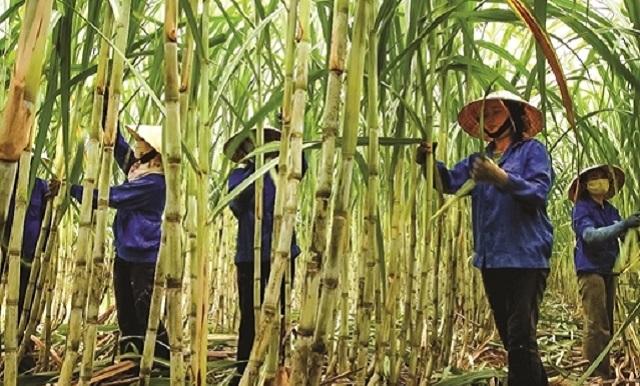 Thủ tướng: Tập trung triển khai giải pháp phát triển ngành mía đường Việt Nam