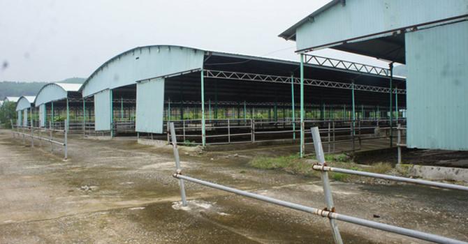 Rà soát tổng thể dự án ngàn tỷ chăn nuôi bò liên quan tới cha con ông Trần Bắc Hà