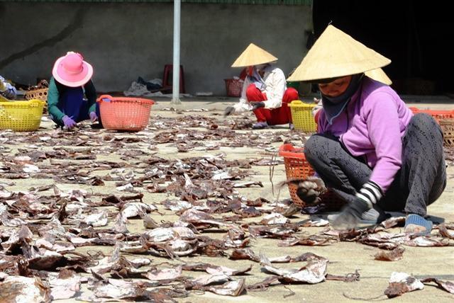 """Gần 1.000 tấn mực khô ứ đọng do Trung Quốc ngừng mua đã được """"giải phóng"""""""