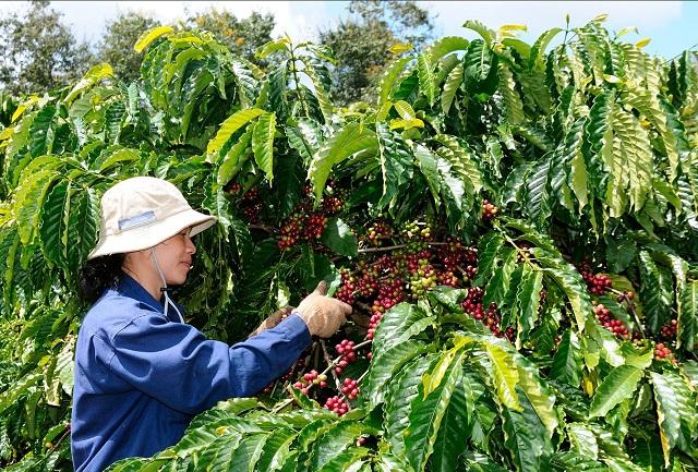 Một doanh nghiệp cà phê muốn thu ít nhất 133 tỷ đồng từ đấu giá cổ phần