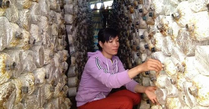 Khởi nghiệp từ 20 triệu đồng, mỗi năm thu nửa tỷ đồng từ nấm