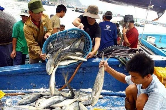Doanh nghiệp hải sản lo khó xuất khẩu sang EU
