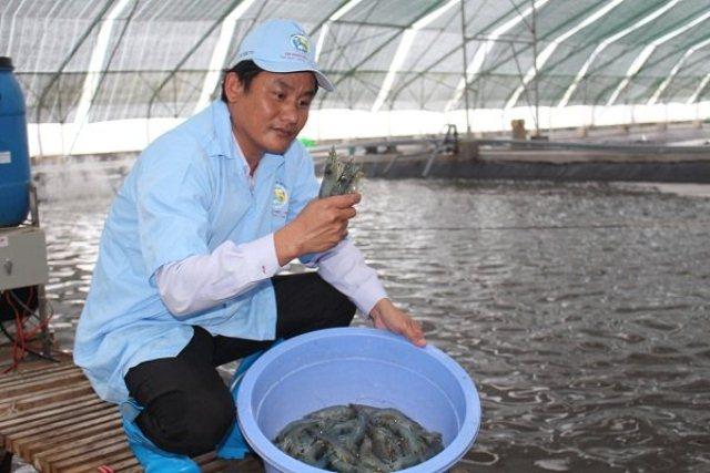 Úc kiểm tra chuỗi sản xuất tôm Việt Nam