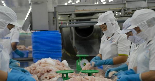 Ảnh hưởng Covid, xuất khẩu cá tra Việt Nam vẫn tăng trưởng, có ở 139 thị trường thế giới