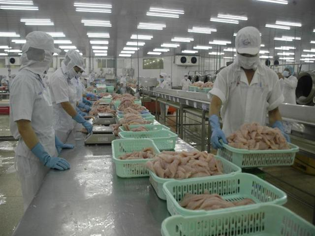 Năm 2019, ngành cá tra Việt Nam giảm toàn diện