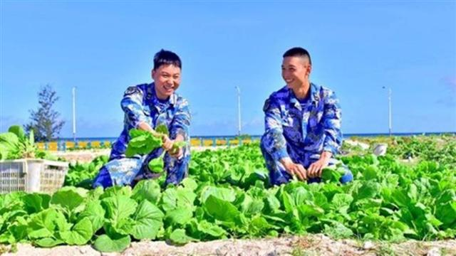 Việt Nam nói gì trước việc Trung Quốc trồng thành công rau xanh trên đảo Phú Lâm?