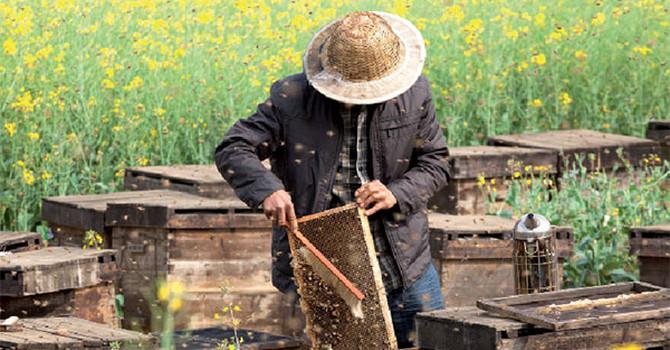 Vị ngọt của mật ong