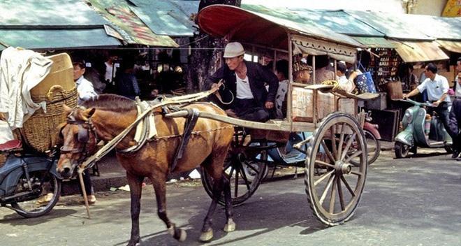 Câu chuyện chú ngựa lười và bài học nhớ đời cho tất cả những ai đang và sẽ đi làm
