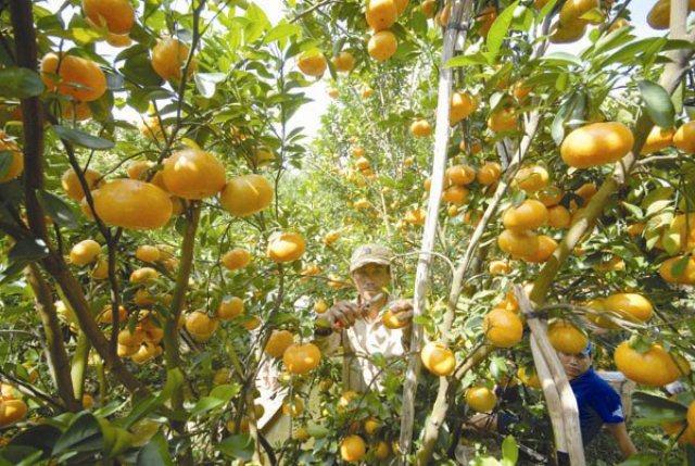 Kiến tạo nền xuất khẩu thực chất Việt Nam
